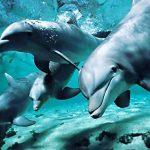 Черное море с дельфинами в естественной среде