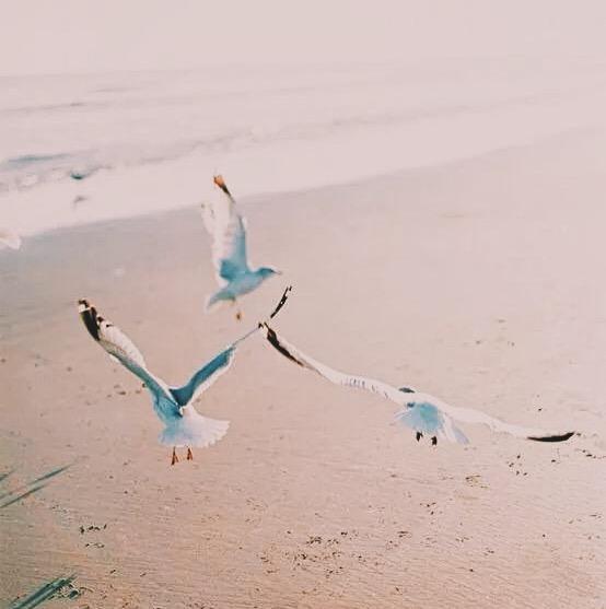 Курорт Катранка, чайки, песчаный пляж